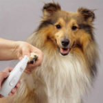 New Automatic Nail Clipper Pet Dog Cat Nail Polisher Pet Grooming Supplies