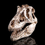 New 16cm Tyrannosaurus T-Rex Dinosaur Resin Skull Model Collectibles Toys Display Craft Gift