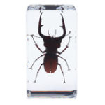 New Stag Beetles Insect Amber Specimen Teaching Paperweight Learning Art Room Decorations