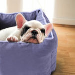 New 6 Colors Pet Dog Cat Square Soft Sleeping Box Portable Pure Color Pet Bed