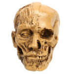 New 9cm Human Anatomical Anatomy Skull Head Muscle Bone Medical Model Home Decor