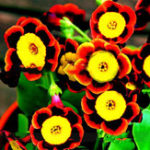 New Egrow 100 Pcs/Pack Petunia Bonsai Seeds Colorful Star Petunia Flower Garden Patio Potted Plant