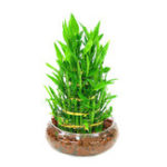 New Egrow 30 PCS/Pack Bamboo Bonsai Seeds DIY  Bamboo Decorations House Dracaena Garden Potted