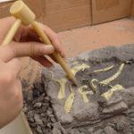 New DIY Dinosaur Fossil Diecast Model Toy Kit Vice Saurolophus Styracosaurus Diplodocus Ceratosaurus Spinosaurus