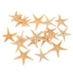 New 20Pcs Mini Starfish Sea Star Shell Landscape Beach Wedding DIY Crafts Making Decorations