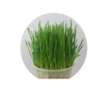 New Yani Cat Dog To Hair Ball Cat Grass Seed 800 Capsules A Pack