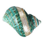 New Natural Large Turban Shell Green Coral Sea Snail Home Fish Tank Decorations 10.5-11CM