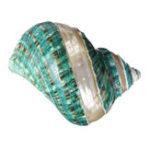 New Natural Large Turban Shell Green Coral Sea Snail Home Fish Tank Decorations 10.5-11CM