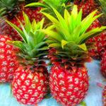 New Egrow 100 Pcs/Bag Pineapple Seeds Dwarf Pineapple Plantas Tree Fruit Rare Bonsais Plant Bonsai For Home Garden Decoration