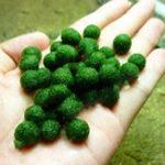 New Egrow 200PCS/Pack Aquatic Plants Seeds Mixed Water Grass Plants Aquarium Fish Tank Grass Aquarium Moss Plante