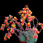 New Egrow 20Pcs/Pack Cactus Seeds Cactus Rebutia Variety Flowering Color Cacti Rare Cactus Garden Office Mini Succulent Plant