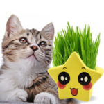 New Cartoon Five-pointed Star Rye Cat Grass with Grass Seeds