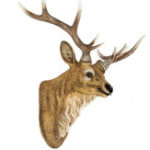 New 34x42cm Resin Deer Head Wall Sculptures Art Wall Hanging Ornament Home Decorations