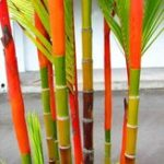 New Egrow 100Pcs/Pack Colorful Palm Tree Seeds Bonsai Bamboo Seeds Home Garden Tree Seeds