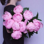 New Egrow 10Pcs/Pack Chinese Peony Flower Seeds Perennial Paeonia Suffruticosa Bonsai Plants Home Garden Plants