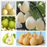 New Egrow 20Pcs/Pack Golden Pear Seeds Garden Courtyard Fruit Tree Plants Seeds