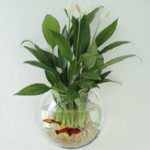 New Acrylic Aquarium Fish Tank Wall Mounted Hanging Plant Pot Grow Vase Home Decor