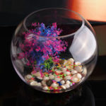 New Round Clear Glass Vase Fish Tank Ball Bowl Flower Planter Terrarium Home Decor