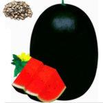 New              Egrow 30 Pcs/Pack Watermelon Seeds Giant Black Watermelon Bonsai Fruit Plant Sweet Juicy Water Melon Home Garden Bonsai